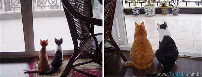 25 Antes e depois de animais que cresceu juntos 11