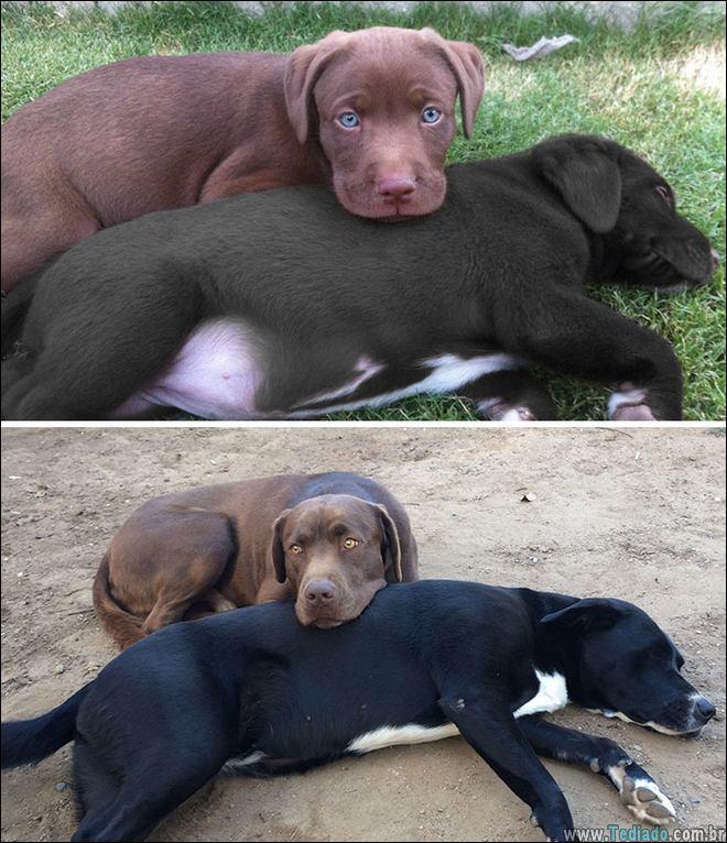 25 Antes e depois de animais que cresceu juntos 13