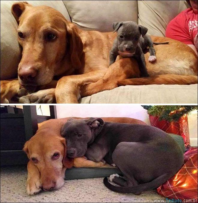 25 Antes e depois de animais que cresceu juntos 14