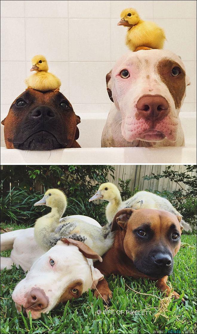 25 Antes e depois de animais que cresceu juntos 15