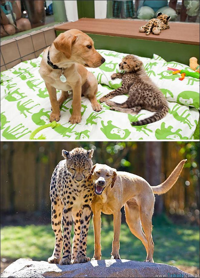 25 Antes e depois de animais que cresceu juntos 18