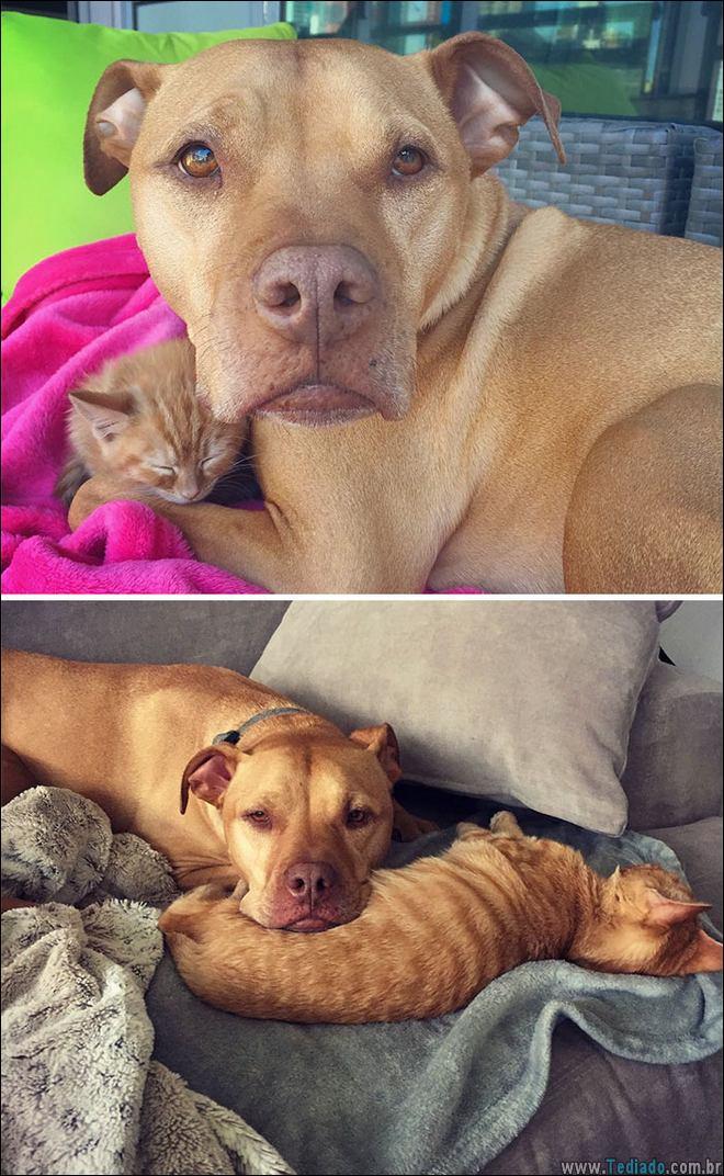 25 Antes e depois de animais que cresceu juntos 19