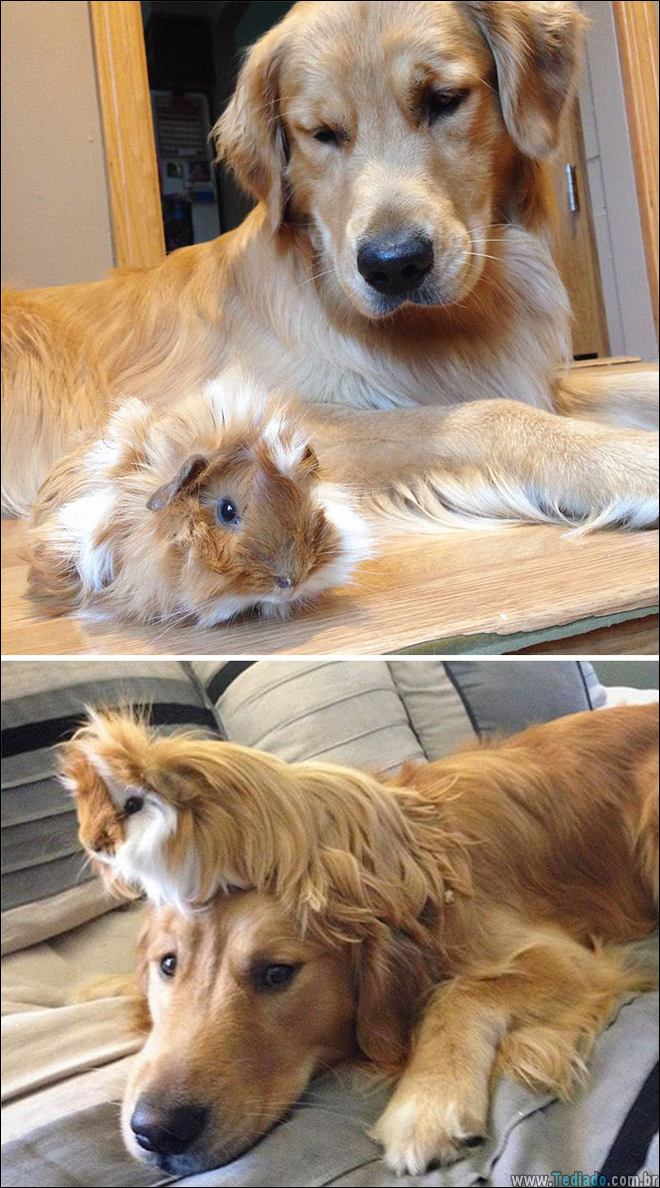25 Antes e depois de animais que cresceu juntos 20