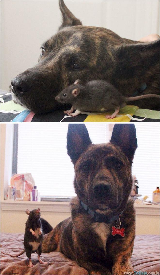 25 Antes e depois de animais que cresceu juntos 22