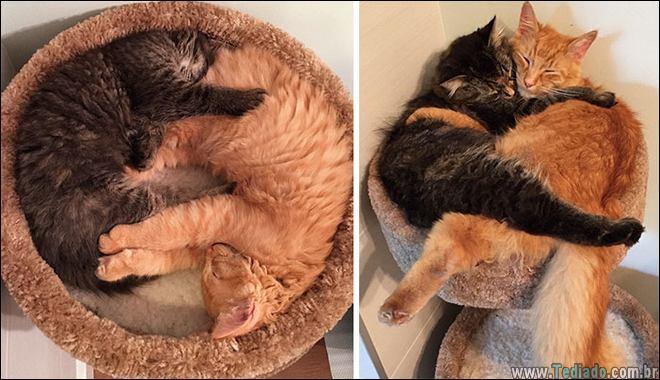 25 Antes e depois de animais que cresceu juntos 24
