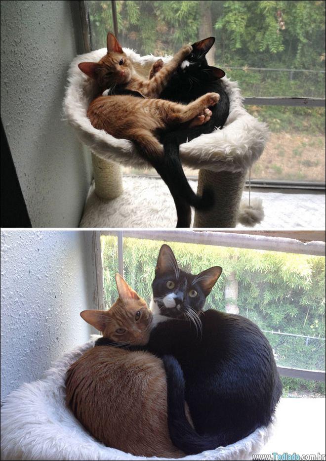 25 Antes e depois de animais que cresceu juntos 26