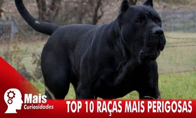 Top 10 raças de cachorros mais perigosas 6