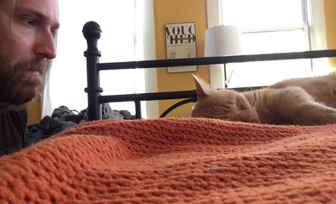 Como se vingar do seu gato 1