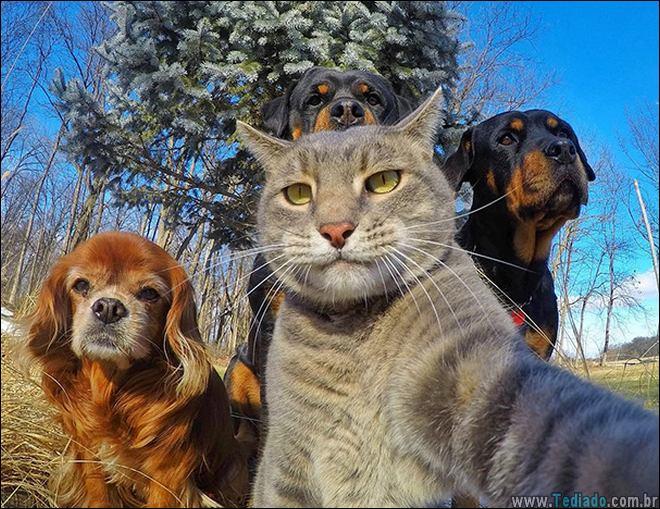 26 Selfies de animais que o farão sorrir 4