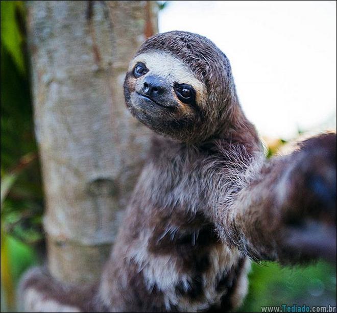 26 Selfies de animais que o farão sorrir 7