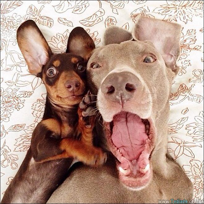 26 Selfies de animais que o farão sorrir 11