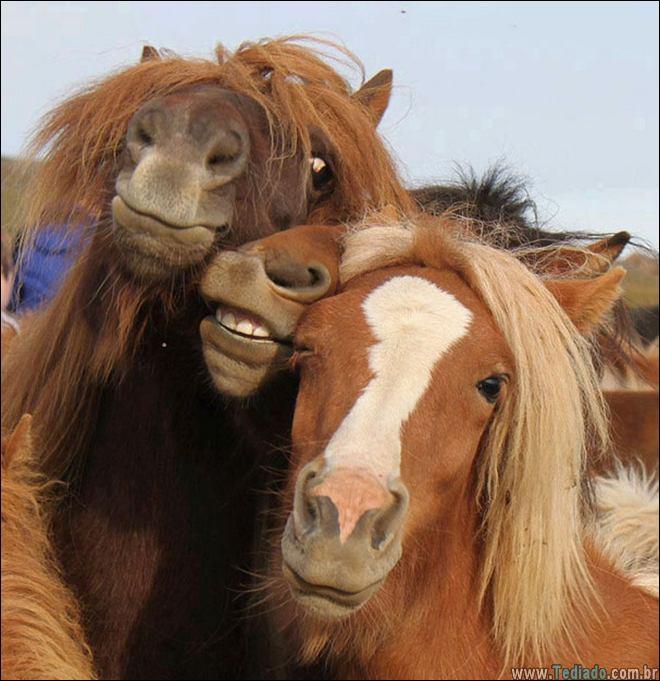 26 Selfies de animais que o farão sorrir 12