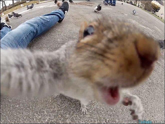 26 Selfies de animais que o farão sorrir 14