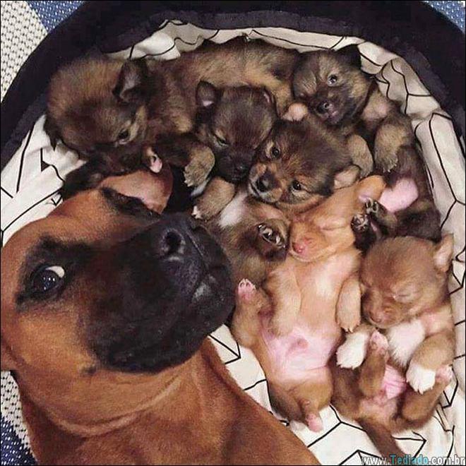 26 Selfies de animais que o farão sorrir 15