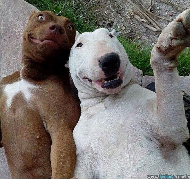 26 Selfies de animais que o farão sorrir 16
