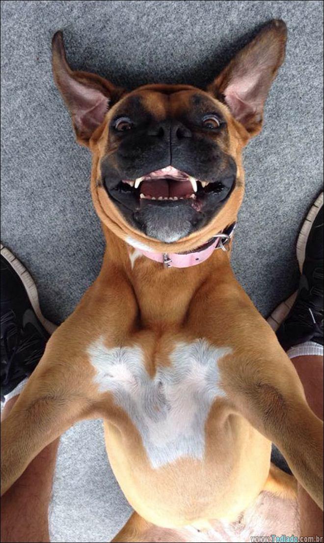 26 Selfies de animais que o farão sorrir 17