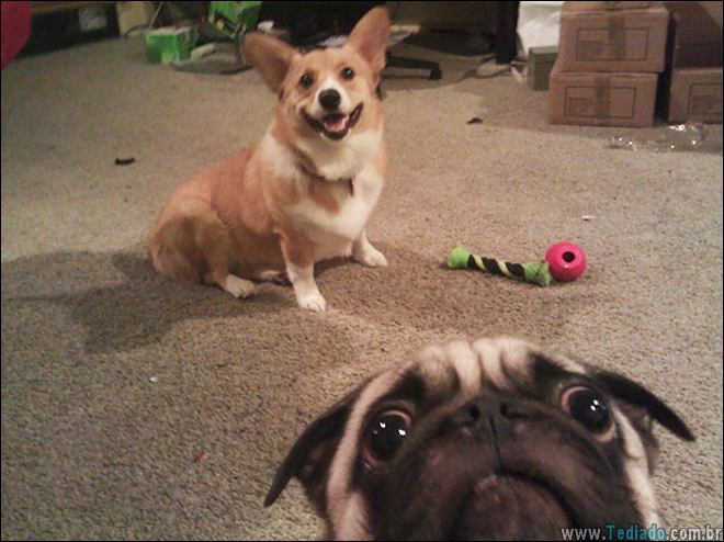 26 Selfies de animais que o farão sorrir 18