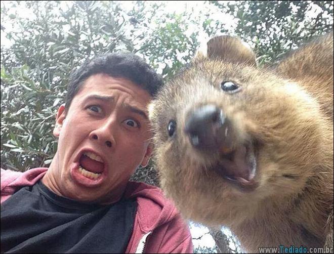 26 Selfies de animais que o farão sorrir 19