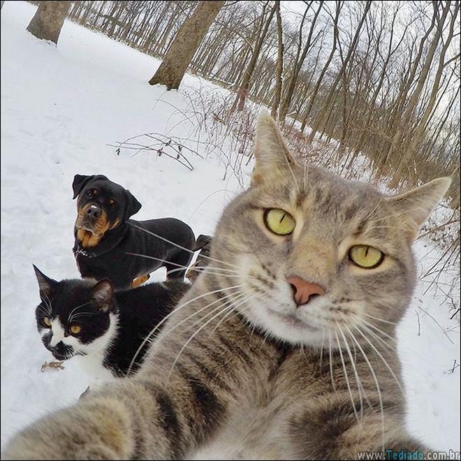 26 Selfies de animais que o farão sorrir 20