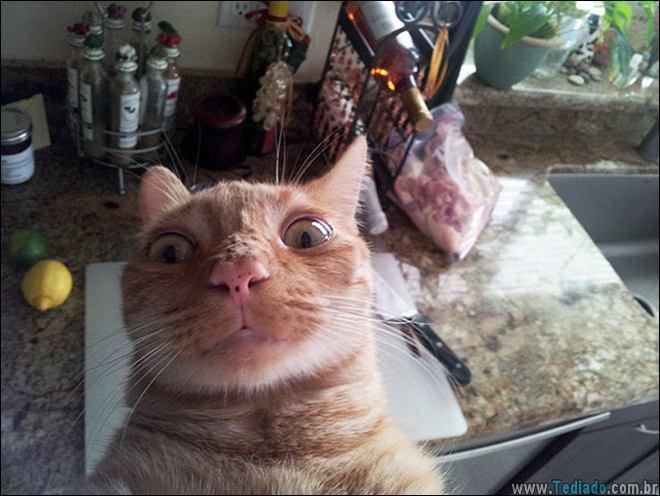 26 Selfies de animais que o farão sorrir 21