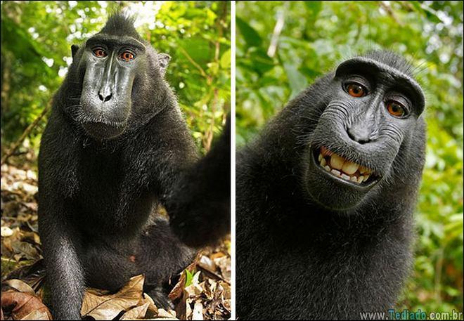 26 Selfies de animais que o farão sorrir 23