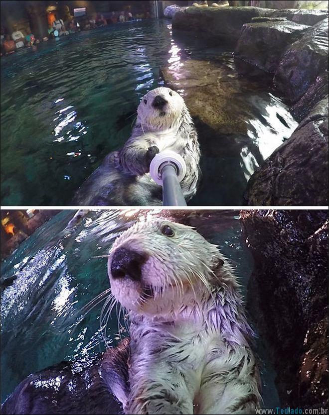 26 Selfies de animais que o farão sorrir 24