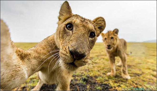 26 Selfies de animais que o farão sorrir 25