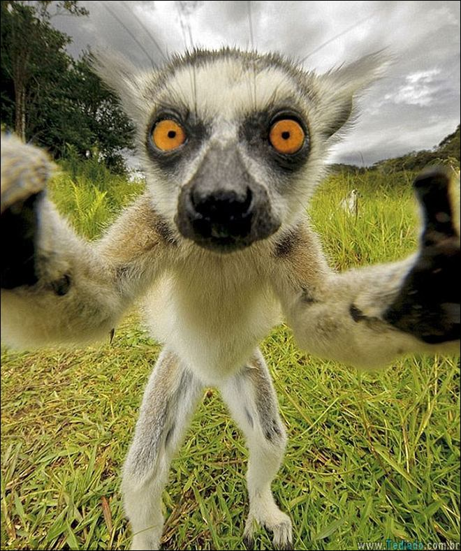 26 Selfies de animais que o farão sorrir 26