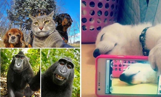 26 Selfies de animais que o farão sorrir 3