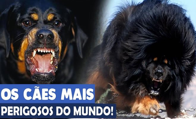 10 Raças de cães mais perigosas do mundo 41