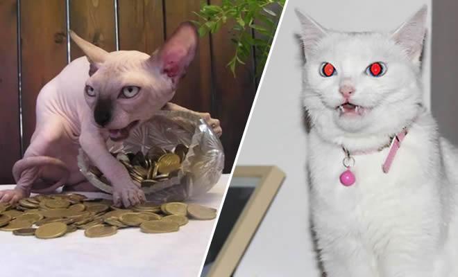 23 fotos que prova que os gatos são realmente demônios 8
