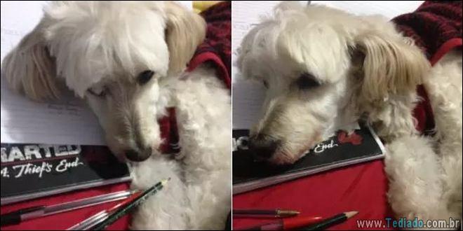 18 fotos de cachorros que é muito folgado 4