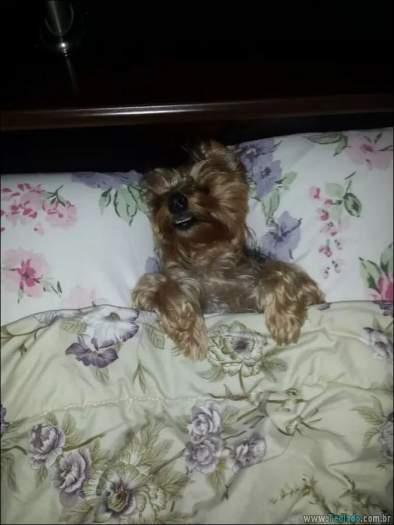 18 fotos de cachorros que é muito folgado 5