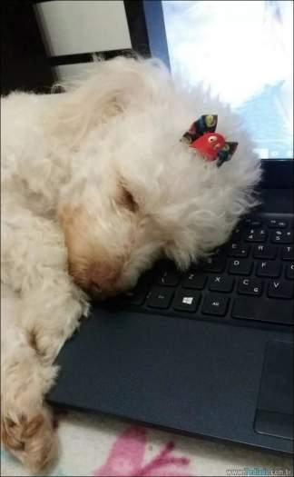 18 fotos de cachorros que é muito folgado 17