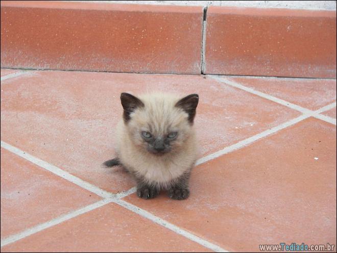 30 gatinhos muito irritados, que é difícil de levar à sério 2