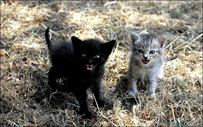 30 gatinhos muito irritados, que é difícil de levar à sério 4