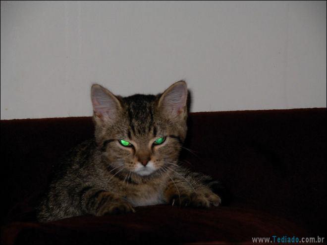 30 gatinhos muito irritados, que é difícil de levar à sério 8
