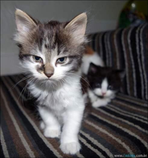 30 gatinhos muito irritados, que é difícil de levar à sério 9