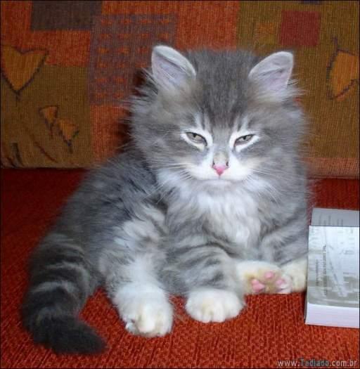 30 gatinhos muito irritados, que é difícil de levar à sério 10