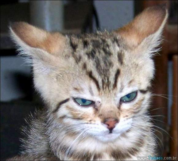 30 gatinhos muito irritados, que é difícil de levar à sério 11