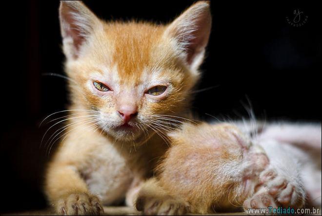 30 gatinhos muito irritados, que é difícil de levar à sério 12
