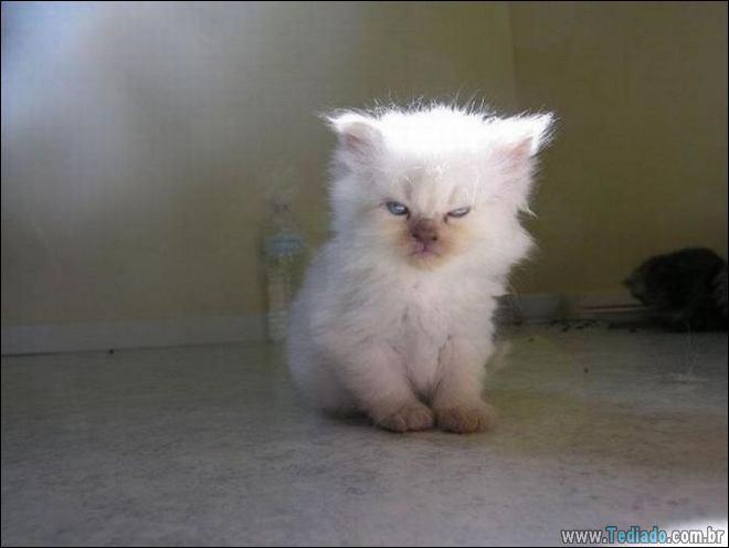 30 gatinhos muito irritados, que é difícil de levar à sério 13