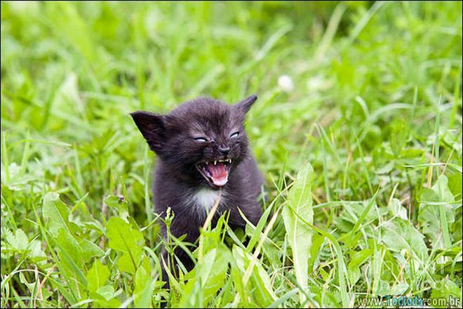 30 gatinhos muito irritados, que é difícil de levar à sério 14