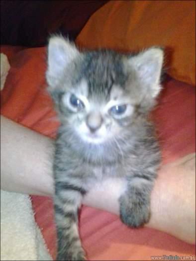 30 gatinhos muito irritados, que é difícil de levar à sério 15