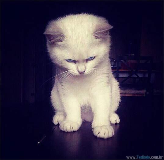 30 gatinhos muito irritados, que é difícil de levar à sério 16