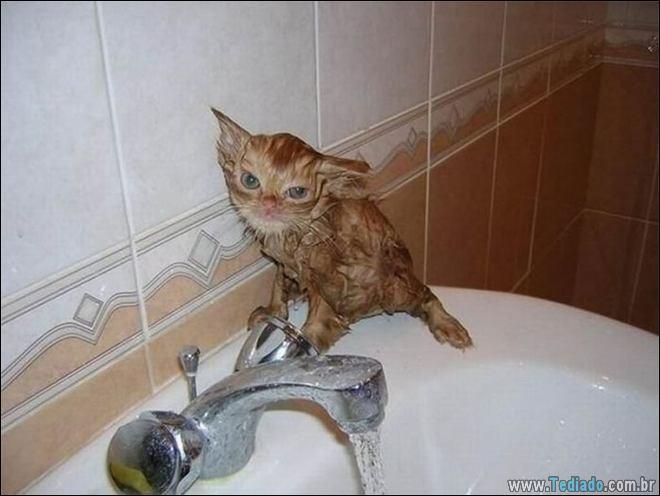 30 gatinhos muito irritados, que é difícil de levar à sério 17