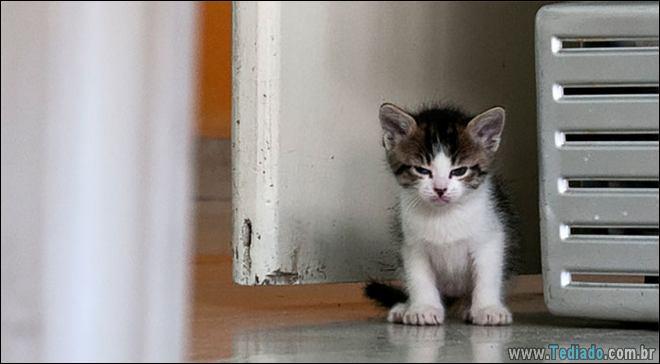 30 gatinhos muito irritados, que é difícil de levar à sério 18
