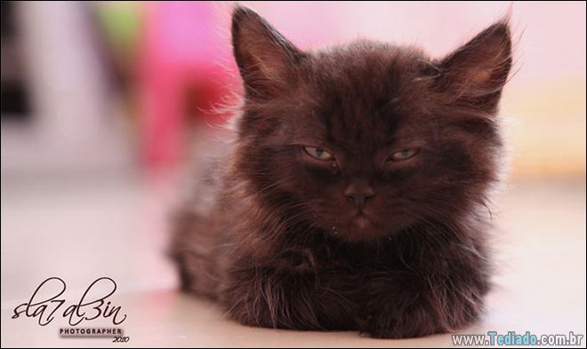 30 gatinhos muito irritados, que é difícil de levar à sério 22