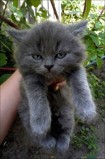 30 gatinhos muito irritados, que é difícil de levar à sério 23