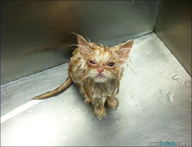 30 gatinhos muito irritados, que é difícil de levar à sério 25